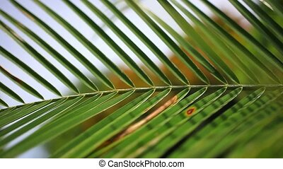 Close up of palm tree leaf on the sky background - close up...