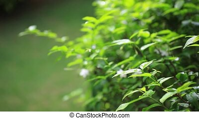 Close up of white flowers on green blurred background.