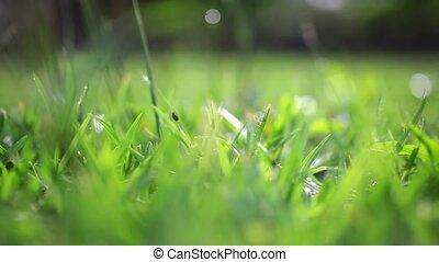 Grass on summer blurred background. Change focus