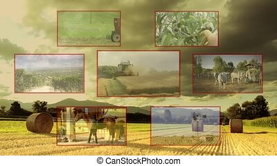 agriculture composition - countryside activities collage