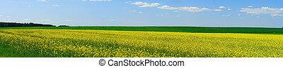 spring landscape - rural meadow blooms springtime...