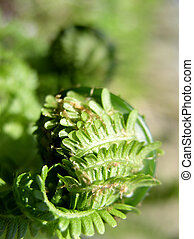 Fresh Fern Frond - Fresh Fern scroll Frond