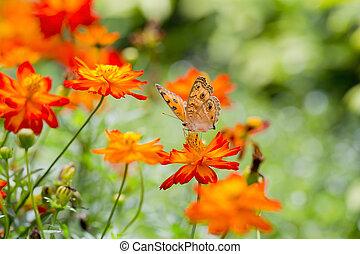 Orange butterfly on flower, Thailand