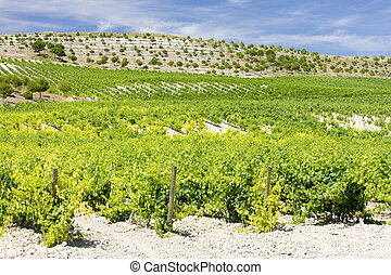 vineyard near Villabanez, Valladolid Province, Castile and...
