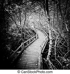 walk way to Mangrove forest-black and white