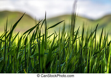 Abstract grass with hills in background - An abstract shot...