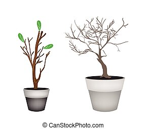 Brown Trees and Tree Buds in Flower Pots - Flower and Plant,...