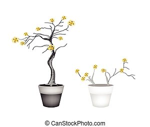 Beautiful Yellow Trees in Two Flower Pots - Flower and...