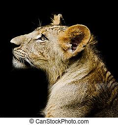 Close-up portrait of female lion
