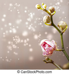 Orchid flower with abstract  background
