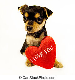 Puppy with sign �I Love You�.
