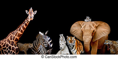 A group of animals are together on a black background with...
