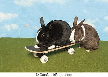 Bunny Gives A Helping Hand - Bunnies on a Skateboard