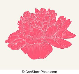 beautiful peony flower in vintage colors isolated on...