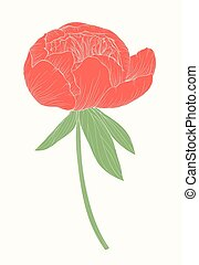 beautiful peony flower in vintage colors isolated on background.