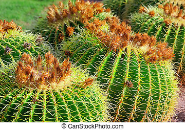 Close-up cactuses