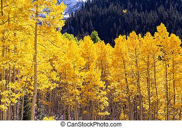 Autumn in Colorado - Fall in Colorado Mountains