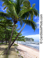 Palm Trees on the Shore. - Palm Trees on Shore in Krabi...