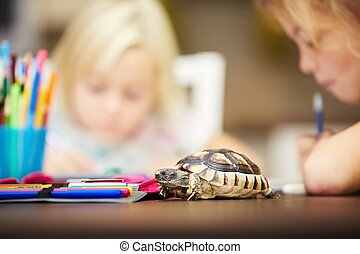 Homework - Girls and turtle Siblings are doing his homework...