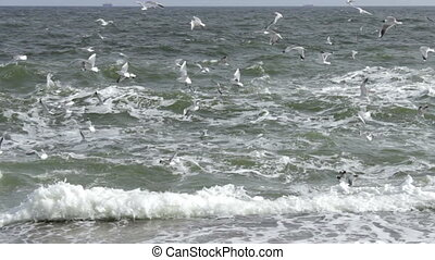 Seagulls fly over waves - High quality and resolution