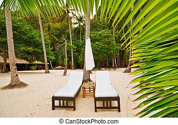 Beach Beds Behind Palm
