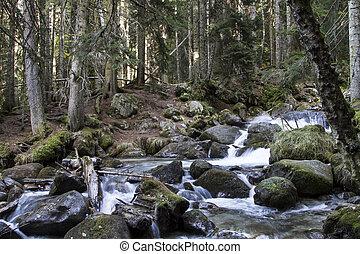 mountain river in Caucasian beech-fir forest - mountain...