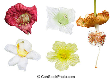 Tropical Flower Set - Set of tropical spice and fruit...