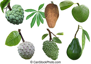 Tropical Fruit Set - Set of tropical fruit and spice...