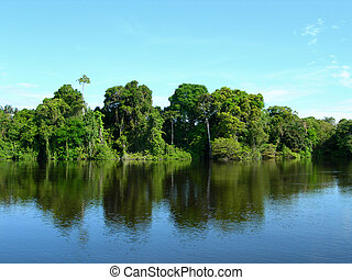 Amazonian rainforest reflecting in Rio Negro lagoon, Brazil,...