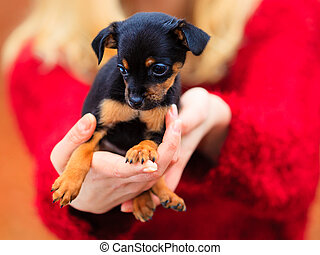 woman embrancing her puppy dog - Pets and people, pet...