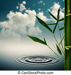 Environmental asian backgrounds with bamboo grass