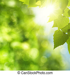 Abstract natural backgrounds with green foliage and sun beam