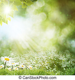 Summer day on the meadow, environmental backgrounds with daisy f
