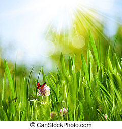 Beautiful summer backgrounds with green grass, flowers and butte