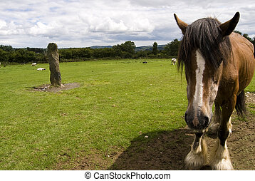 Close-up of a horse. Wicklow, Ireland. - A horse on a sunny...