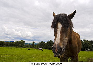 Close-up of a horse Wicklow, Ireland - A horse on a sunny...
