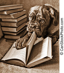 Dog Reading book and turning pages in Sepia Tone