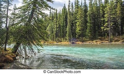 Bow river - The Bow river along Icefield road. Bow lake...