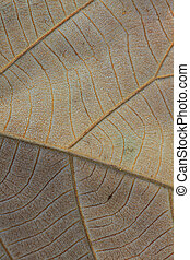 Abstract green leaf texture for background, close up nature