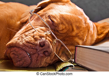 Smart Dog Sleeping in Books - Smart Dog in Glasses Sleeping...