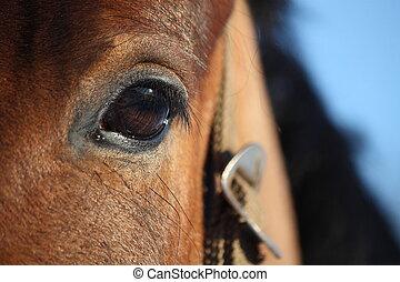 Chestnut horse eye close up - Beautiful chestnut horse eye...