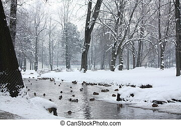 Lake with birds in winter - Lake with birds in cold winter