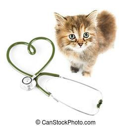 mascotas, concepto, veterinario, gato, blanco, sobre