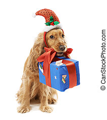 dog in santa hat gives gift - beautiful dog in santa hat...