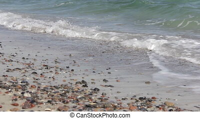 Nice sea shells on the sandy beach - High quality and...