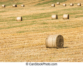 Hay-Roll On Meadow After Harvest On Summer End Landscape