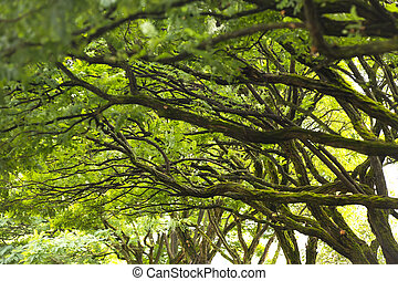 tree branches - background of tree branches with leaves