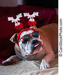 Bulldog's Christmas