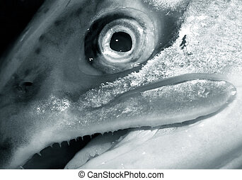 Fresh salmon - Extreme close-up of a fish eye - Shallow dept...