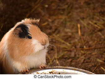 hamster - cute hamster standing close to a water bowl